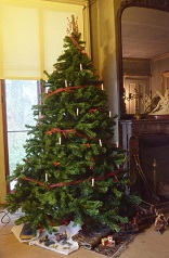A Christmas tree in the Evergreens