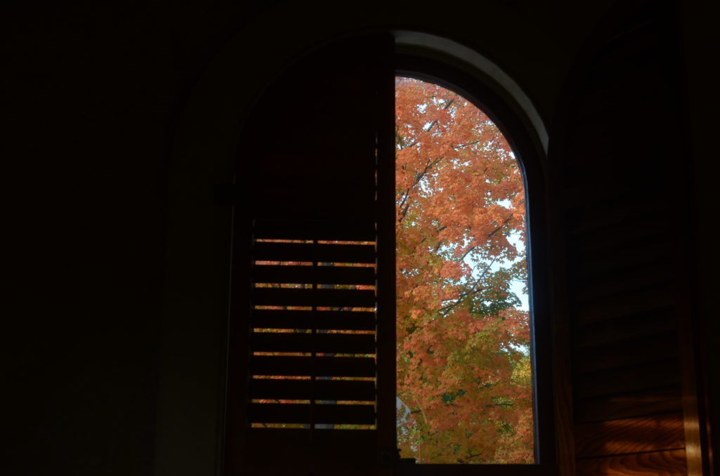 A shutter closed over half a window, with a view of autumn foliage