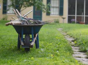 Wheelbarrow full of rakes on the homestead lawn