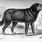 black and white illustration of a dog