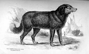 black and white illustration of a dog