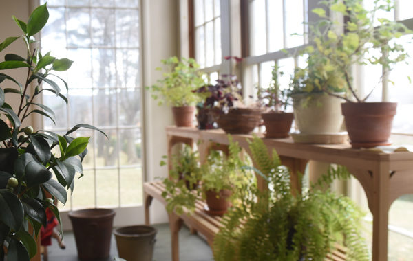Conservatory filled with green plants in front of a big window