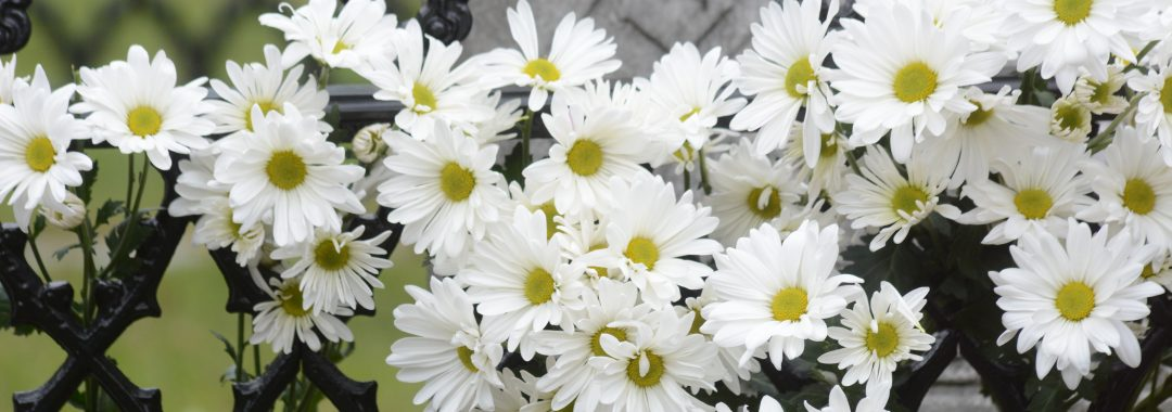 Photo of Daisies at Emily's tombstone